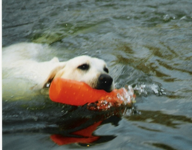 waterretrieve.jpg
